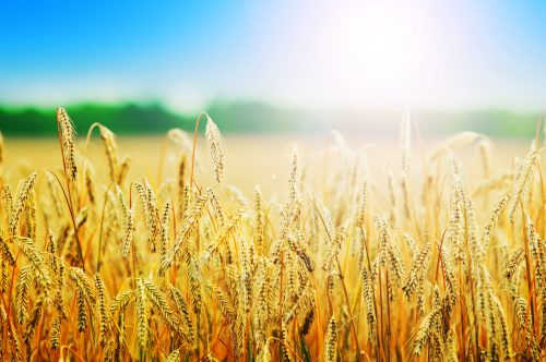 Cereales Teruel